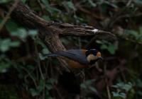 ヤマガラ - 可愛い野鳥たち 2