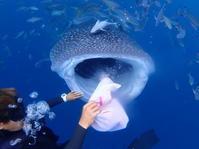 9月26日まだまだなんとか行けてます!! - 沖縄・恩納村のダイビング・青の洞窟体験ダイビング・スノーケルご紹介