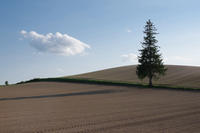 クリスマスツリーの木 - 花と風景 Photo blog