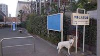 Vol.1394 大島とんぼ公園 - 小太郎の白っぽい世界