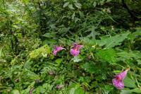 吾妻山の秋の花々・二 - 田舎もんの電脳撮影日記