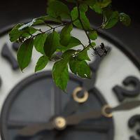 秋を感じて浜離宮撮影会本日も日テレ営業中18.09.16 13:10 - スナップ寅さんの「日々是口実」