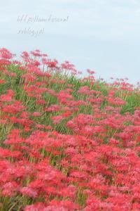 赤の景色 - 一瞬をみつめて