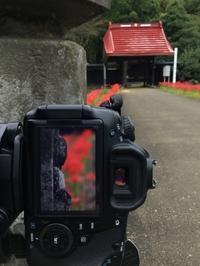 ヒガンバナの紅い群生をカメラに収めに出かけてきました。 - 武蔵屋勝田台店のわいわいスタッフブログ