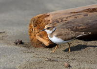 寂しそう - 綺麗な野鳥たち
