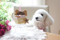 1stバースデー♡ - Petit Terrace♪