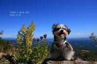 山のブランコ♪(9月の山・Ⅲ) - FUNKY'S BLUE SKY