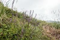 吾妻山の秋の花々・三 - 田舎もんの電脳撮影日記