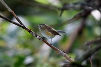 涼求めてⅣ - 鳥撮りDAIRY