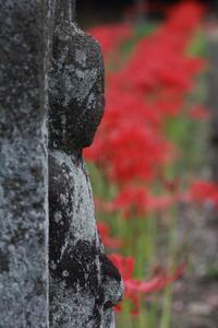 ヒガンバナ、その名のとおり、お彼岸に合わせたかのように咲きそろっていました。 - 武蔵屋勝田台店のわいわいスタッフブログ