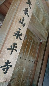 永平寺 - A DAY IN THE LIFE/猫屋敷の日常