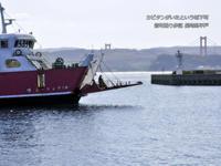 大航海時代の面影を辿る平戸港 - HIMICO - FINDER