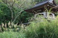 鎌倉浄智寺の秋の花 - 木洩れ日 青葉 photo散歩