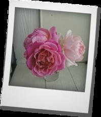 ピンクのバラ - khh style
