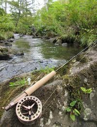 今シーズン最後の渓流釣行でした~(^^♪ - アンパラなブログ   フライ、トラウトルアー編