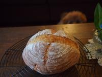 カンパーニュ@ホシノ天然酵母試作つづく - 土浦・つくば の パン教室 Le soleil