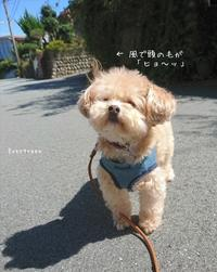 9/28(金)  ④      爽やかさんぽ🐾 - Evergreen. ~常磐に唐草*庭の花~