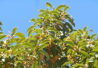 路傍の花、樹々の鳥(224)~運動会の季節の花~  - 大屋地爵士のJAZZYな生活