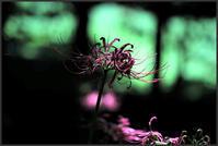 小石川植物園 -6 - Camellia-shige Gallery 2