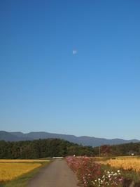 稲刈り日和 - 八ヶ岳 革 ときどき くるみ