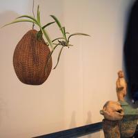 ポッタン花器 - warble22ya