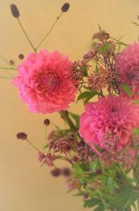 秋の花と音楽と - まほろば日記
