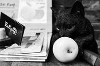 林檎であそぶ黒猫 - 節操のない写真館