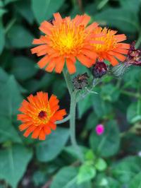 秋霖の合間 - piecing・針仕事と庭仕事の日々