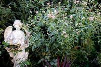 秋の庭(2018年) - バラとハーブのある暮らし Salon de Roses