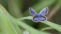 ブログ開設4周年 - 紀州里山の蝶たち