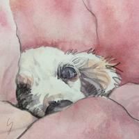 「 おやすみ 」 - 犬の絵、描きます < Eyes of a Dog >