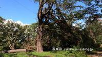 植物園に行く9月-2 - 写楽彩