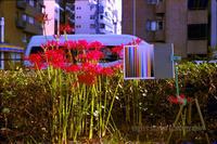 カラーネガのリバーサル現像 - mglss studio photography blog