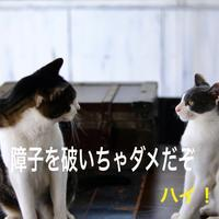 にゃんこ劇場「お説教中!」 - ゆきなそう  猫とガーデニングの日記