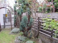 知人の庭 - 69歳からの写ガール