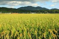稲、ススキ、花とのコラボで - ゆる鉄旅情