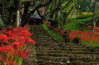 復活!仏隆寺の彼岸花 - 花景色-K.W.C. PhotoBlog