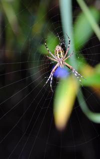 蜘蛛 - 平凡な日々の中で