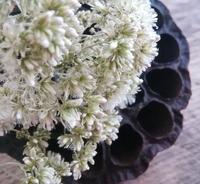 鵯花の匂い袋… - 侘助つれづれ