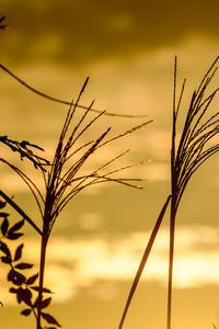 秋の光 - 長い木の橋