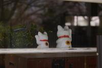 招き猫の日♪ - aya's photo