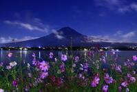 30年9月の富士(11)夜のコスモスと富士 - 富士への散歩道 ~撮影記~