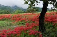 煙(けむ)にむせぶ葛城山麓 - katsuのヘタッピ風景