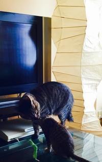 宇宙との交信!トラちゃんの10月占い - 猫丸ねずみの大荒れトーク