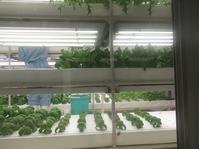 南部同窓会・大阪府立大学植物工場 - これから見る景色