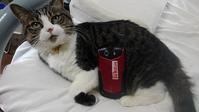 【猫】スマホホルダー - 人生を楽しくイきましょう!