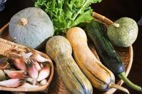 ■嵐の前に収穫 【菜園南瓜他とお庭の茗荷&冷凍保存中の野菜】 - 「料理と趣味の部屋」