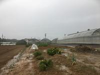 雨の日の畑観察 - 週末農夫コーディーのイケてる鍬の振るい方