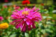 夏の日の思い出夏の花 - 風の香に誘われて 風景のふぉと缶