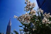 新世紀大江戸百景59NTTドコモビル - 風の香に誘われて 風景のふぉと缶